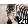 Zoo De Labenne, Labenne