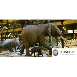 MNHN : Grande Galerie de l'Evolution et Expositions permanentes