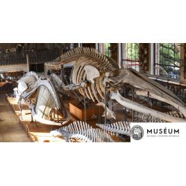 MNHN : Les Galeries d'Anatomie comparée et de Paléontologie