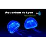 Aquarium de Lyon, La Mulatiere