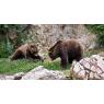 Zoo de Mulhouse, Mulhouse
