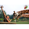Parc Zoologique Cerza, Hermival Les Vaux
