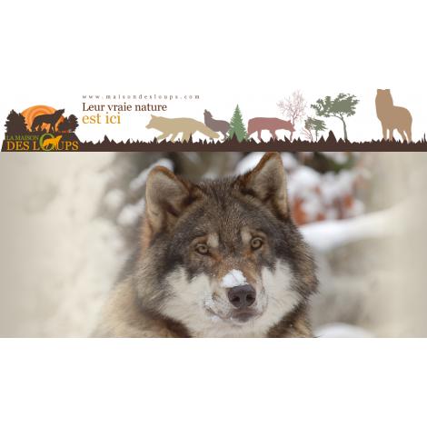 La maison des loups, Orlu