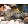 La Planète des Crocodiles, Civaux