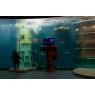 Aquarium de St Malo (L'Anneau des Mers), Saint-Malo